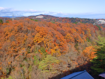 青葉山の紅葉